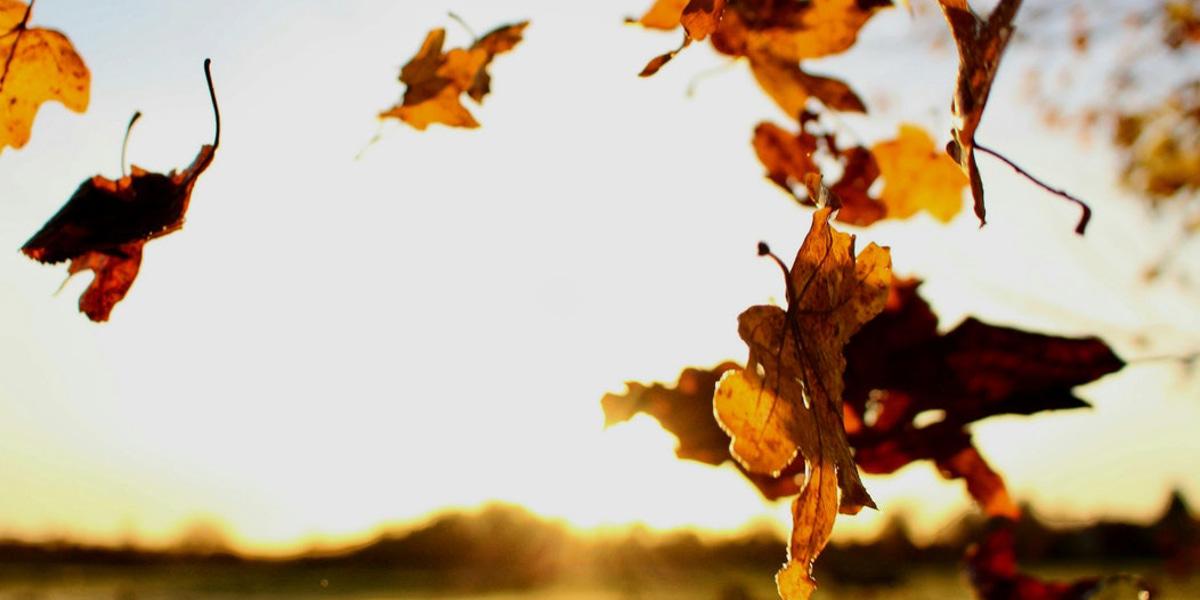 Afbeelding van Vitamine D: een goede aanvulling in de herfst