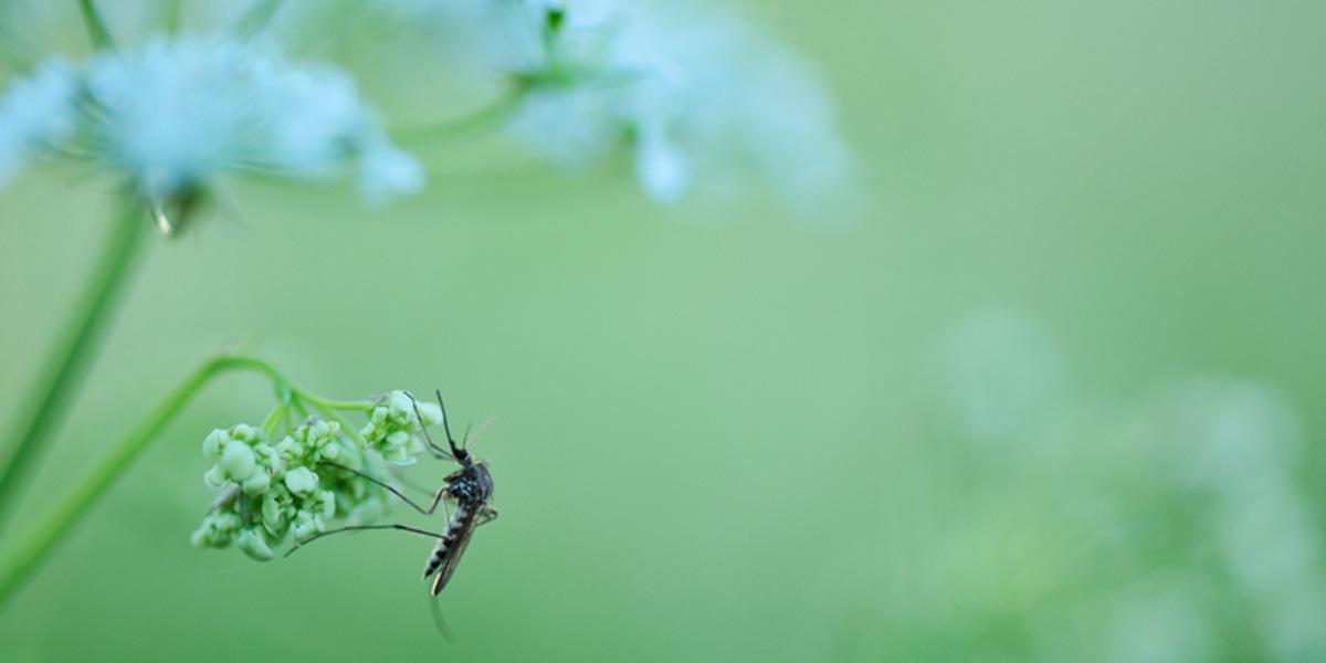 anti muggen tips