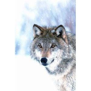 Animal Essences Wolf afbeelding
