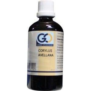 GO Corylus avellana afbeelding