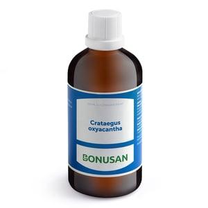 Bonusan Crataegus oxycantha afbeelding